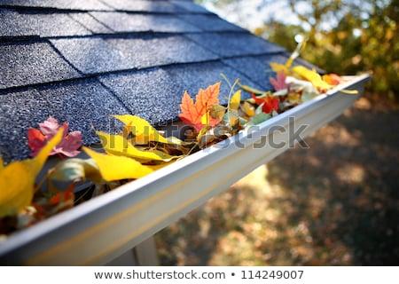 bladeren · regen · goot · home · onderhoud · vallen - stockfoto © fer737ng