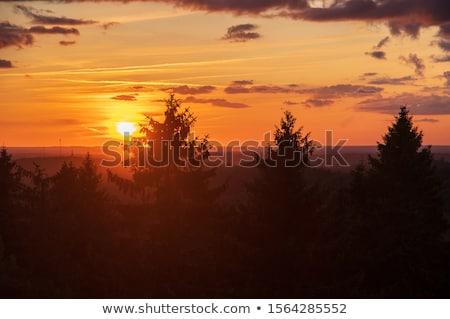Arancione tramonto abete rosso foresta montagna Romania Foto d'archivio © taviphoto