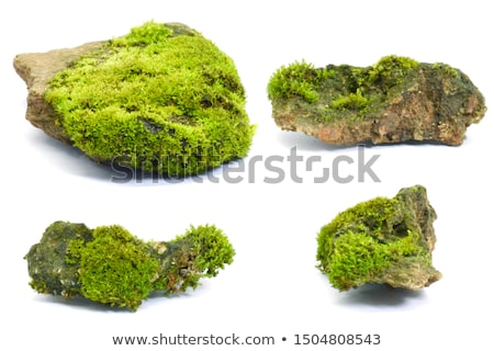 Colorful Rock stone moss texture Stock photo © TasiPas