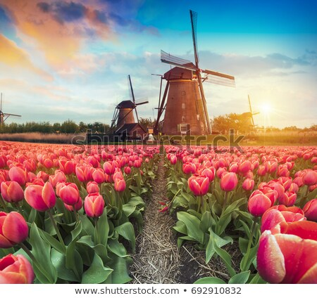 windmills of Kinderdijk world heritage site Stock photo © mariephoto