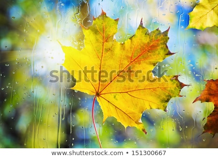autumn maple leaf on glass with water drops stock photo © valeriy