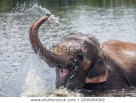 воды · Safari · парка · ЮАР · слон · реке - Сток-фото © simoneeman