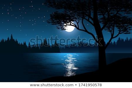 Drzewo światło księżyca ilustracja księżyc gwiazdki noc Zdjęcia stock © adrenalina