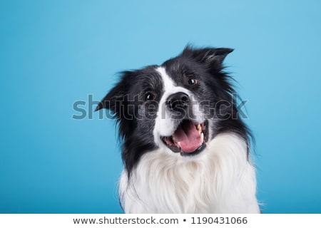 Schwarz weiß Hund glückliches Gesicht Illustration glücklich Kunst Stock foto © bluering