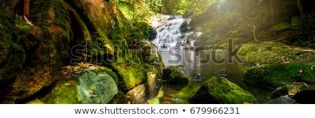 Kondalilla Falls in Kondalilla Falls National Park. Stock photo © artistrobd