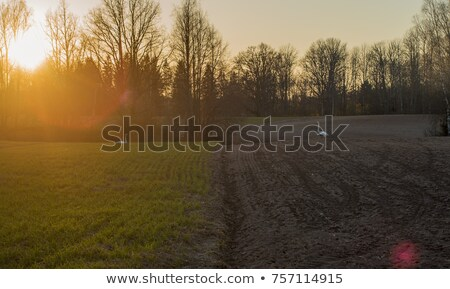 Whooper swans on plowed field Stock photo © Mps197