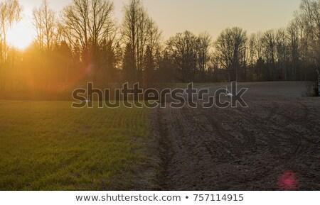 campo · campos · primavera · grama · aves - foto stock © Mps197