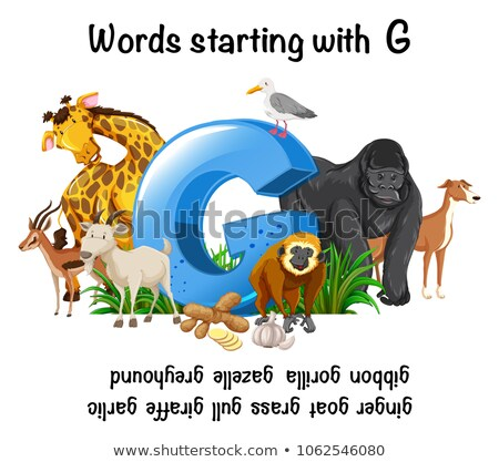 Words Strating with Letter G Stock photo © bluering