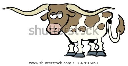 inek · kafa · atış · Teksas · kahverengi · beyaz - stok fotoğraf © eh-point