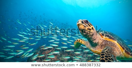 Flock of fish under water Stock photo © Anna_Om