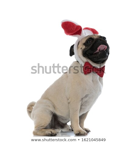 side view of lovely seated boxer panting Stock photo © feedough