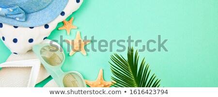 Zomer witte zeester tropische palm Stockfoto © Illia