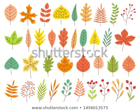 fall fallen autumnal leaves isolated icons vector stock photo © robuart