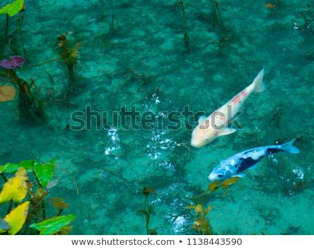 Tre pesce stagno illustrazione sfondo arte Foto d'archivio © colematt
