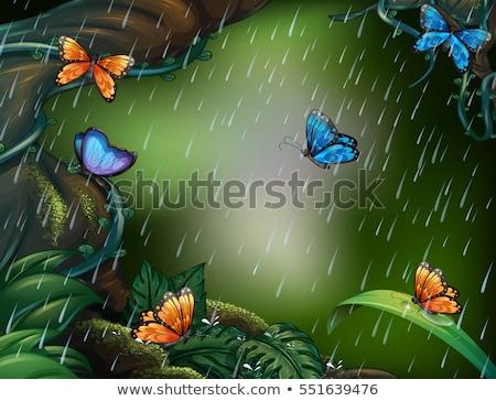 natureza · projeto · arbusto · bicho · ilustração · flor - foto stock © colematt