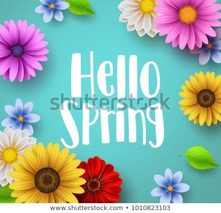 Virágmintás keret hello tavasz színes virágok Stock fotó © odina222