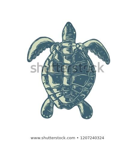 Sea Turtle Top View Scratchboard  Stock photo © patrimonio