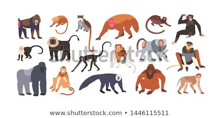 Cute · обезьяны · набор · Постоянный · счастливым · джунгли - Сток-фото © colematt