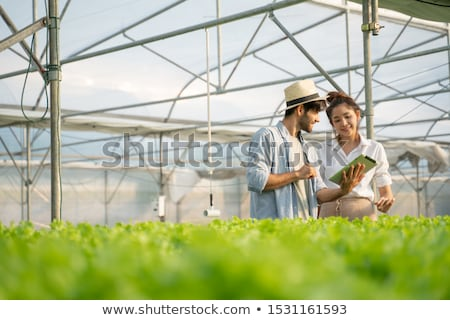 Farmer researching plant in hydroponic salad farm. Agriculture and scientist concept Stock photo © galitskaya