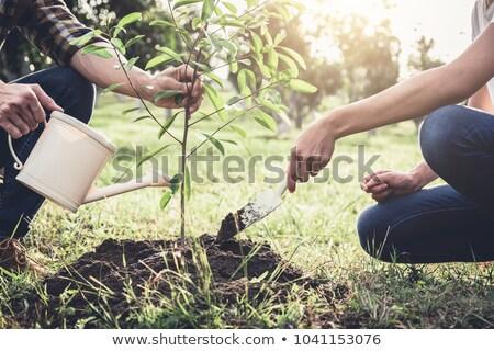 boom · werken · tuin - stockfoto © Freedomz