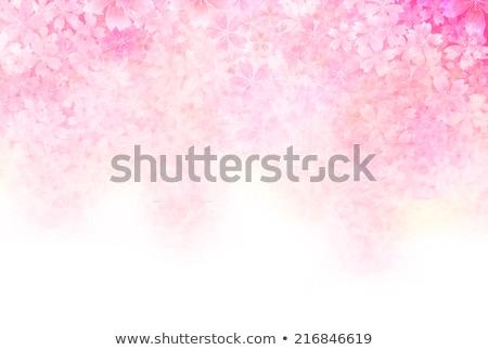 Wiosną różowy wiśniowe kwiaty kwitnienia oddziału Zdjęcia stock © Artspace