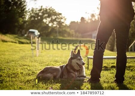 Hombre husky competencia perro ir Foto stock © cynoclub