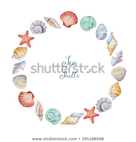blanche · mer · obus · starfish - photo stock © maisicon