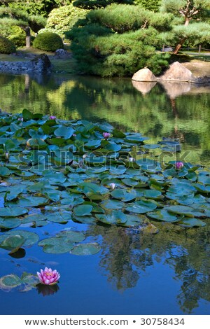 Japanese Garden in Seattle, WA. Pond with water lilies. Stock photo © iriana88w