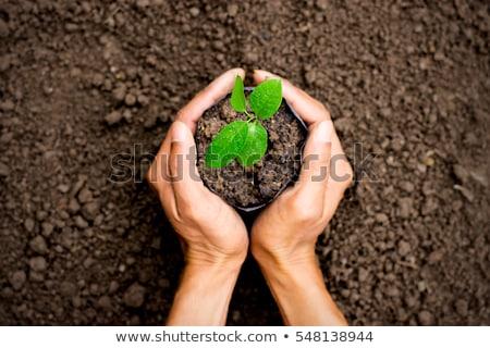 Verde impianto sporco mano fresche isolato Foto d'archivio © boroda