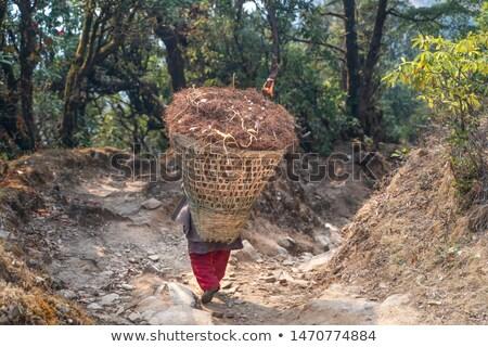 Weg wederopbouw bergen himalayas wegenbouw graafmachine Stockfoto © dmitry_rukhlenko