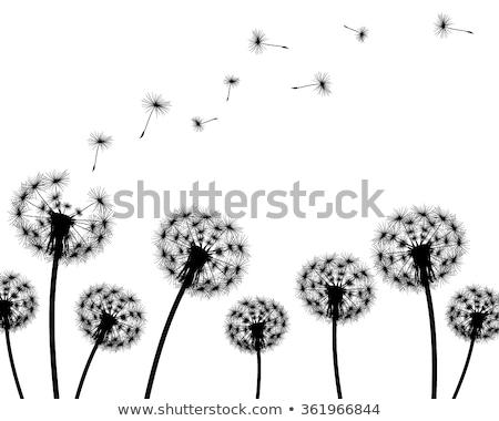 paardebloem · bloem · zaden · macro · plant · zaad - stockfoto © nelosa