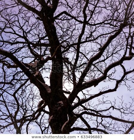 Moon shine through big fairytale tree at night Stock photo © Juhku