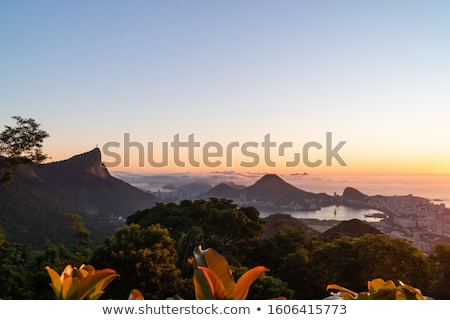 Forest and city view over Rio Stock photo © epstock