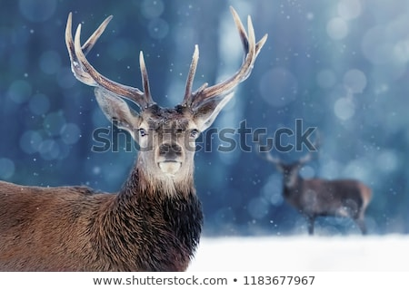 Deer And Snow Stock photo © LittleLion