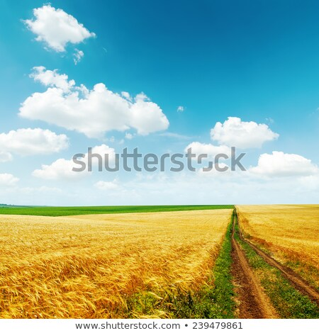 луговой Blue Sky облака белый дерево Сток-фото © my-photomir