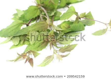 Mexican dream herb Stock photo © joker