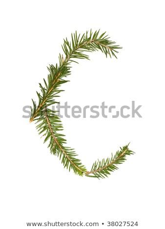 Lucfenyő c betű izolált fehér fa tél Stock fotó © gemenacom
