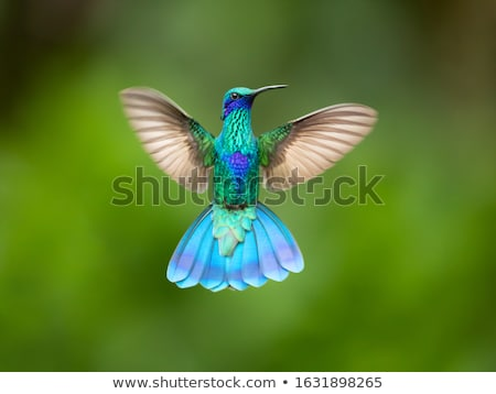 Hummingbird крыльями белый птица животного Flying Сток-фото © lenm