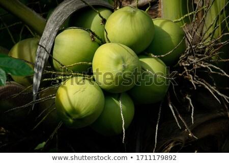 Coco primer plano tiro textura frutas Foto stock © Ximinez