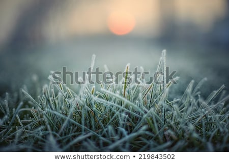 colorful autumn leaves and plants covered with frost Stock photo © oei1