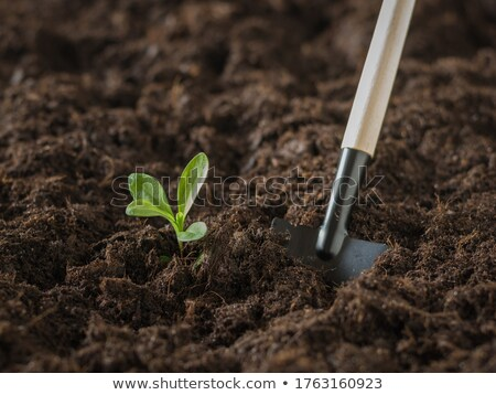 Shovel with soil and plant. Stock photo © fantazista