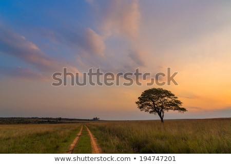 Road past the lone tree Stock photo © milsiart