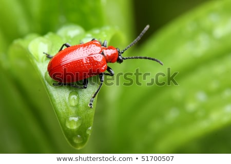 Water lily leaf beetles on a water lily leaf Stock photo © Mps197