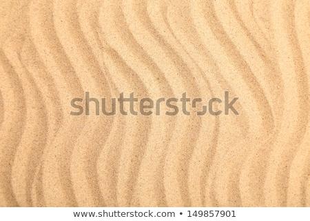 ряби · структур · песчаный · пляж · ветер · текстуры · солнце - Сток-фото © 5xinc
