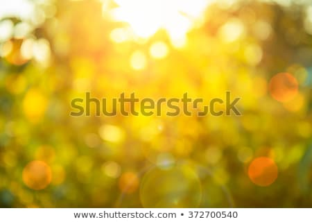 Blurred sun light through the trees Stock photo © muang_satun
