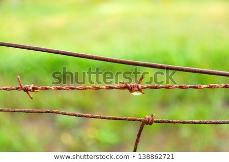 Old barbed wire and pig Stock photo © Klinker