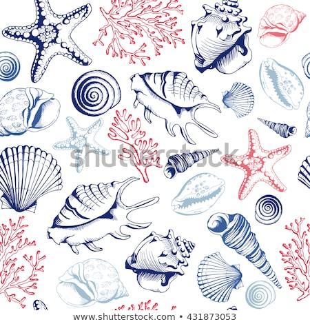 deniz · hayvanları · kart · gülümseme · deniz · dizayn - stok fotoğraf © bluering