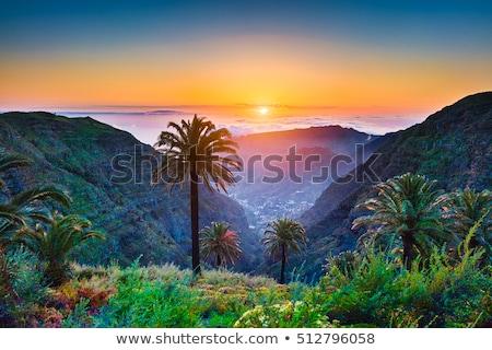 LA sziget tájkép kilátás vulkán virág Stock fotó © tuulijumala