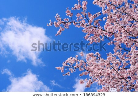 blooming flowers under the clear blue sky stock photo © bluering
