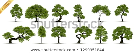 green vector tree isolated on white background stock photo © tuulijumala